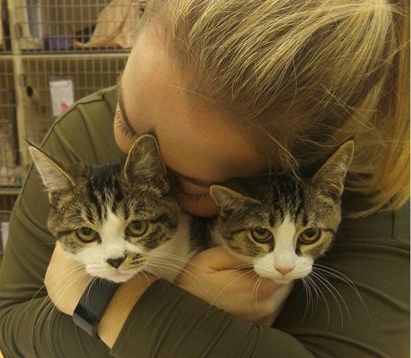 Andrea and kittens